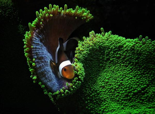 تحت البحار: 20 صورة تعبّر عن عظمة الكون
